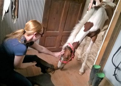 Military Psychologist with foal