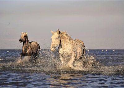 Free_horses